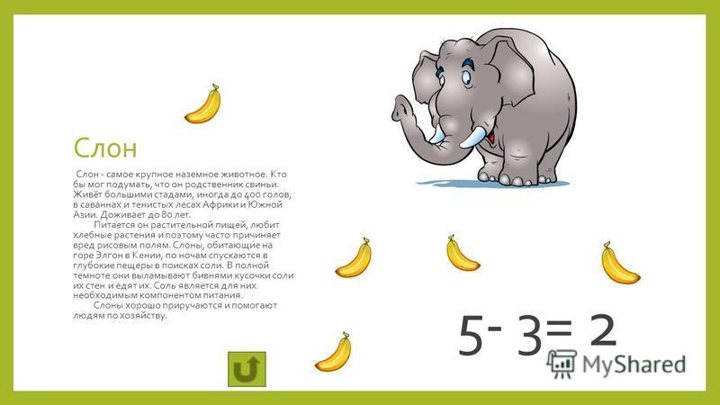 Слон Слон - самое крупное наземное животное. Кто бы мог подумать, что он родственник свиньи. Живёт большими стадами, иногда до 400 голов, в саваннах и тенистых лесах Африки и Южной Азии. Доживает до 80 лет. Питается он растительной пищей, любит хлебн