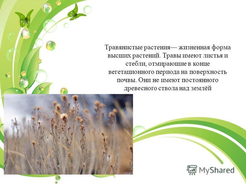 Травянистыке растения жизненная форма высших растений. Травы имеют листья и стебли, отмирающие в конце вегетационного периода на поверхность почвы. Они не имеют постоянного древесного ствола над землёй Травяни́стыке расте́ния (как ботанический термин