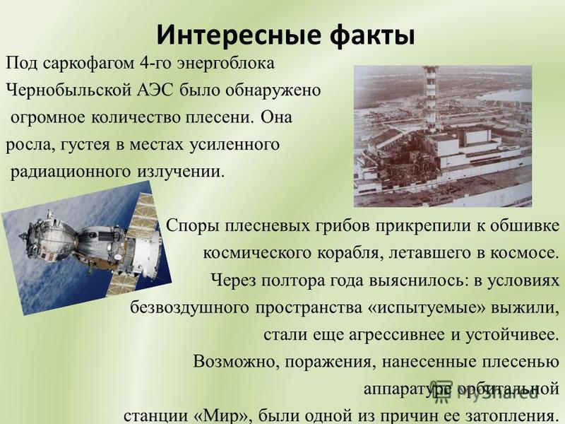 Интересные факты Под саркофагом 4-го энергоблока Чернобыльской АЭС было обнаружено огромное количество плесени. Она росла, густея в местах усиленного радиационного излучении. Споры плесневых грибов прикрепили к обшивке космического корабля, летавшего