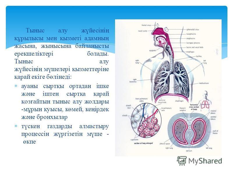 Тыныс алу жүйесінің құрылысы мен қызметі адамның жасына, жынысына байланысты ерекшеліктері болады. Тыныс алу жүйесінің мүшелері қызметтеріне қарай екіге бөлінеді: ауаны сыртқы ортадан ішке және іштен сыртқа қарай қозғайтын тыныс алу жолдары -мұрын қу