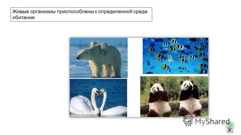 Живые организмы приспособлены к определенной среде обитания