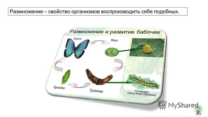 Размножение – свойство организмов воспроизводить себе подобных.