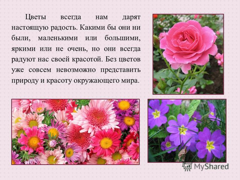 Цветы всегда нам дарят настоящую радость. Какими бы они ни были, маленькими или большими, яркими или не очень, но они всегда радуют нас своей красотой. Без цветов уже совсем невозможно представить природу и красоту окружающего мира.