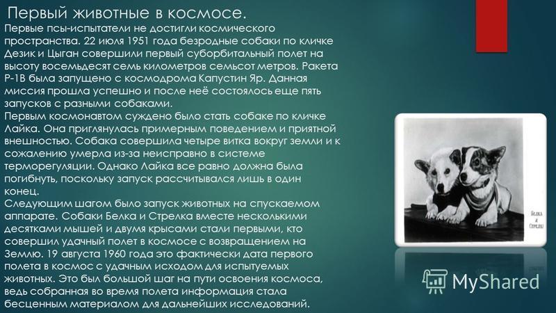 День космонавтики. ПОДГОТОВИЛА УЧЕНИЦА 6 «Б» КЛАССА ШКОЛЫ 19 БОРОВИКОВСКАЯ ДАРЬЯ.