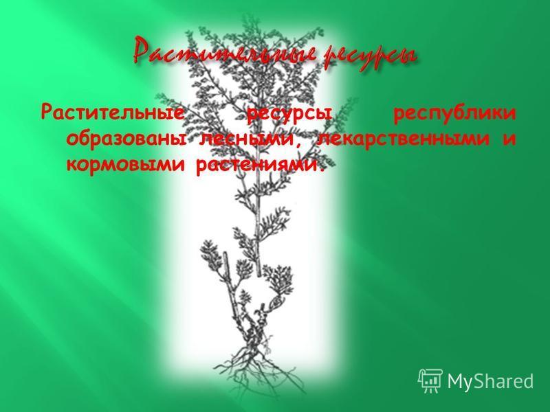 Растительные ресурсы республики образованы лесными, лекарственными и кормовыми растениями.