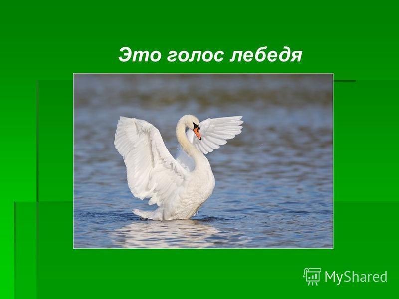 Это голос лебедя