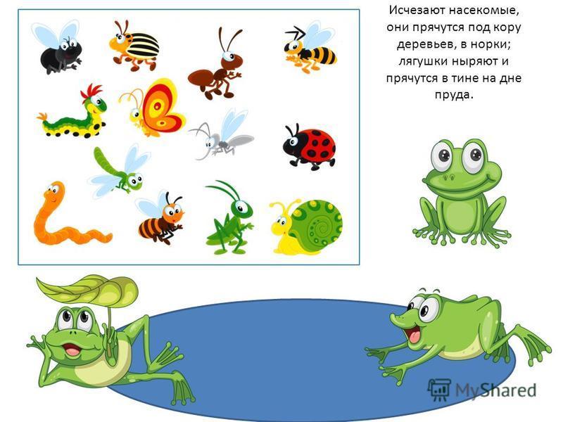 Исчезают насекомые, они прячутся под кору деревьев, в норки; лягушки ныряют и прячутся в тине на дне пруда.