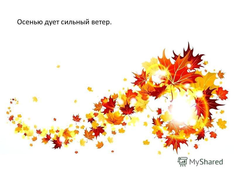 Осенью дует сильный ветер.