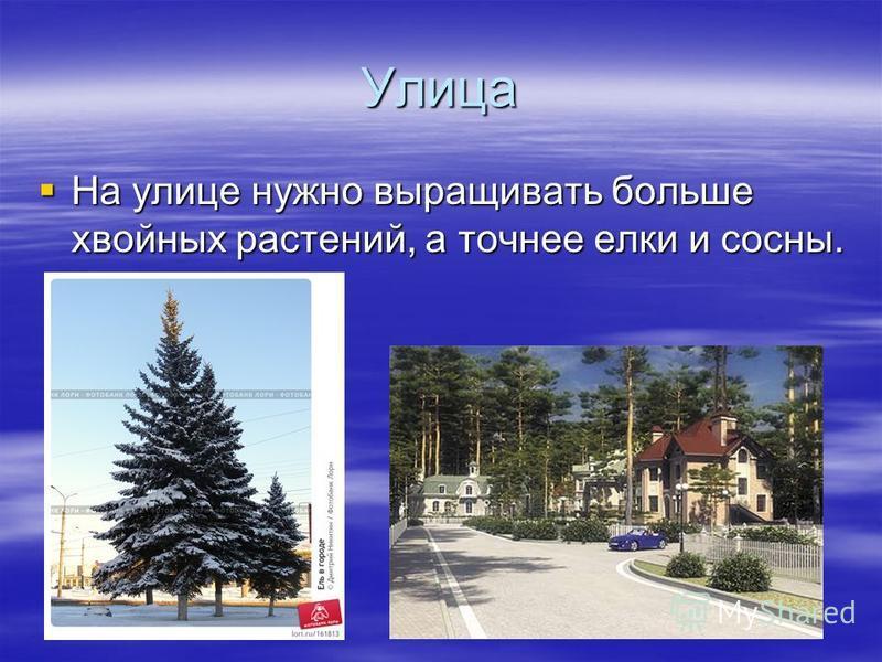 Улица На улице нужно выращивать больше хвойных растений, а точнее елки и сосны. На улице нужно выращивать больше хвойных растений, а точнее елки и сосны.