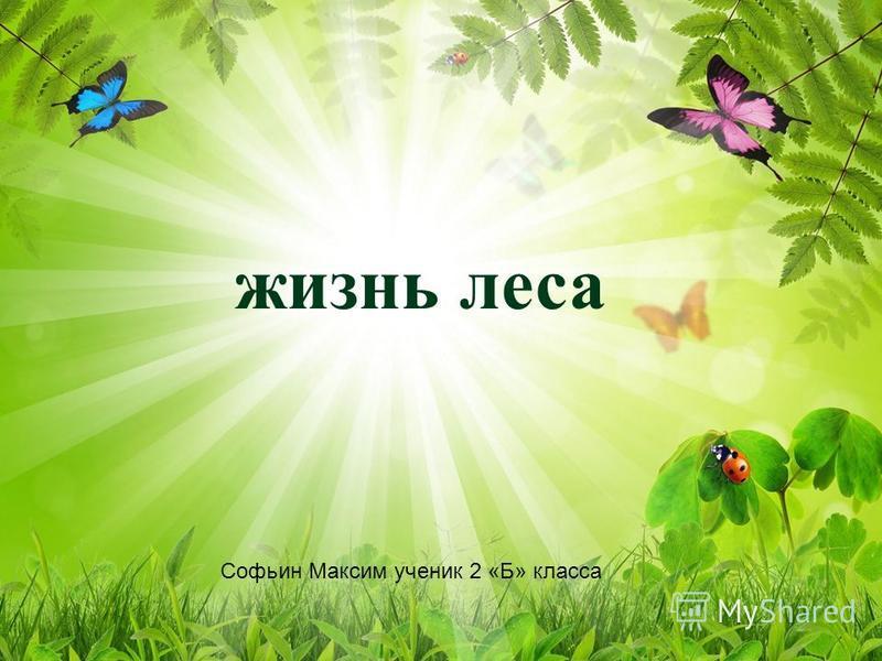 жизнь леса Софьин Максим ученик 2 «Б» класса