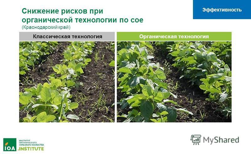 Эффективность Классическая технология Органическая технология Снижение рисков при органической технологии по сое (Краснодарский край)