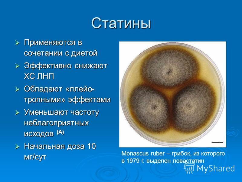 статины ингибиторы гмг коа редуктазы