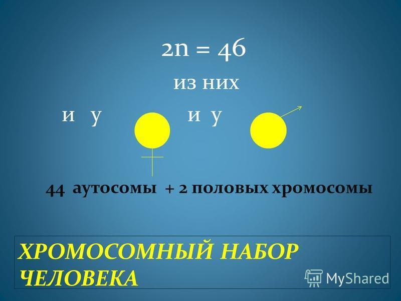 ХРОМОСОМНЫЙ НАБОР ЧЕЛОВЕКА 2n = 46 из них и у и у 44 аутосомы + 2 половых хромосомы