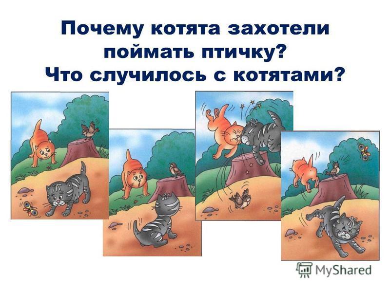 Почему котята захотели поймать птичку? Что случилось с котятами?