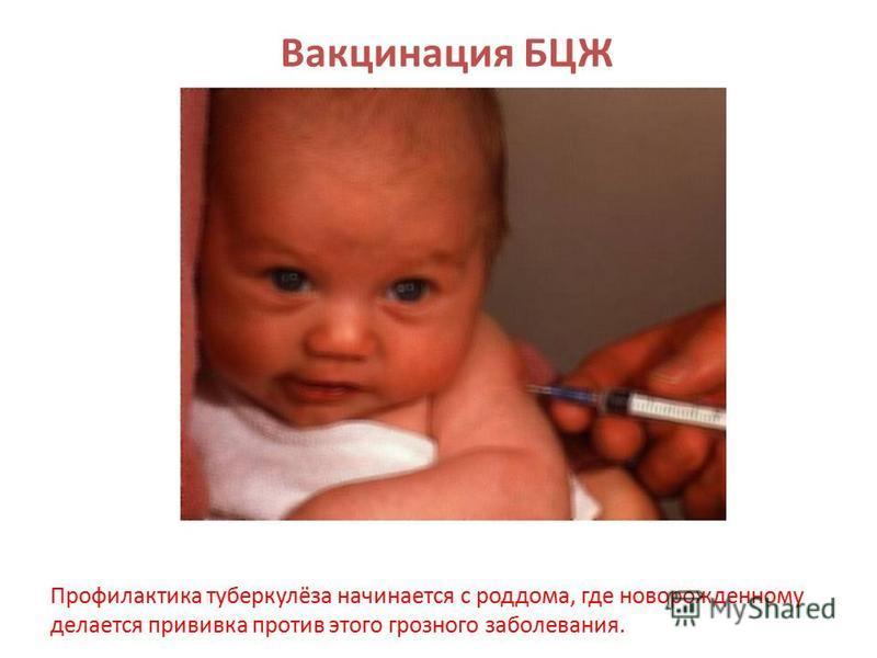 Вакцинация БЦЖ Профилактика туберкулёза начинается с роддома, где новорожденному делается прививка против этого грозного заболевания.