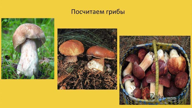 Посчитаем грибы
