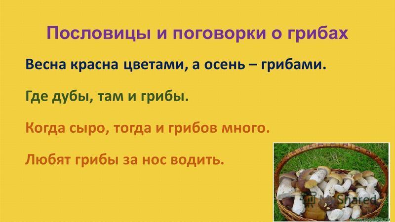 Пословицы и поговорки о грибах Весна красна цветами, а осень – грибами. Где дубы, там и грибы. Когда сыро, тогда и грибов много. Любят грибы за нос водить.