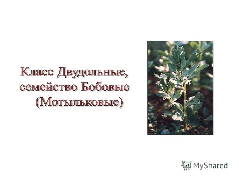Семейство Коли- чество видов Жизненная форма Распро- странение Лист ЦветокПлод Значение Кресто- цветные Бобовые Розовые Паслё- новые Злаки