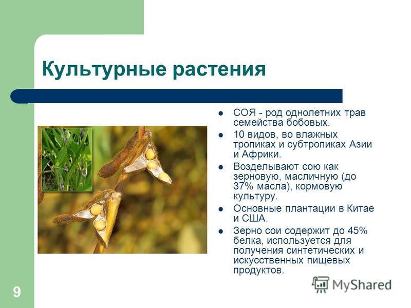 8 Особенности растений семейства