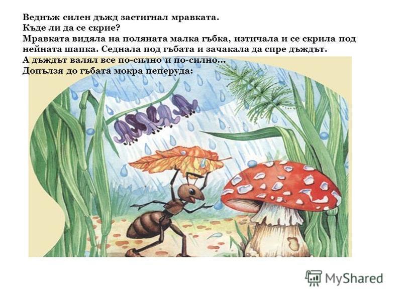Веднъж силен дъжд застигнал мравката. Къде ли да се скрие? Мравката видяла на поляната малка гъбка, изтичала и се скрила под нейната шапка. Седнала под гъбата и зачакала да спре дъждът. А дъждът валял все по-силно и по-силно... Допълзя до гъбата мокр