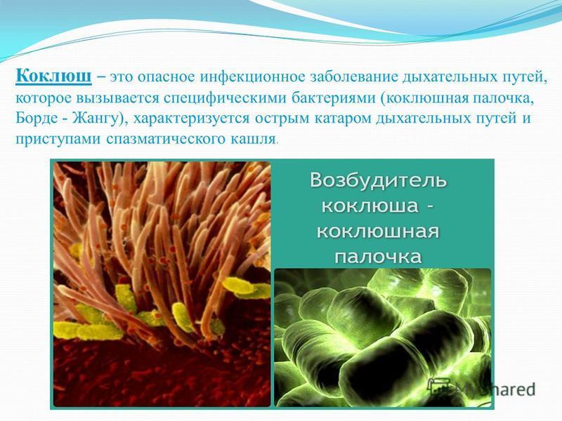Коклюш – это опасное инфекционное заболевание дыхательных путей, которое вызывается специфическими бактериями (коклюшная палочка, Борде - Жангу), характеризуется острым катаром дыхательных путей и приступами спазматического кашля.