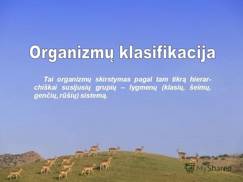 Tai organizmų skirstymas pagal tam tikrą hierar- chiškai susijusių grupių – lygmenų (klasių, šeimų, genčių, rūšių) sistemą.