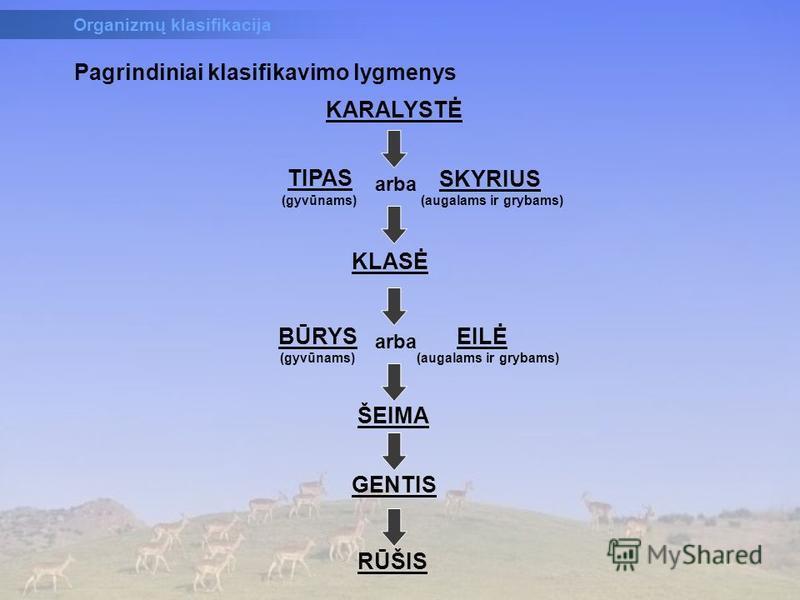 KARALYSTĖ TIPAS (gyvūnams) SKYRIUS (augalams ir grybams) arba KLASĖ BŪRYS (gyvūnams) arba EILĖ (augalams ir grybams) ŠEIMA GENTIS RŪŠIS Pagrindiniai klasifikavimo lygmenys Organizmų klasifikacija