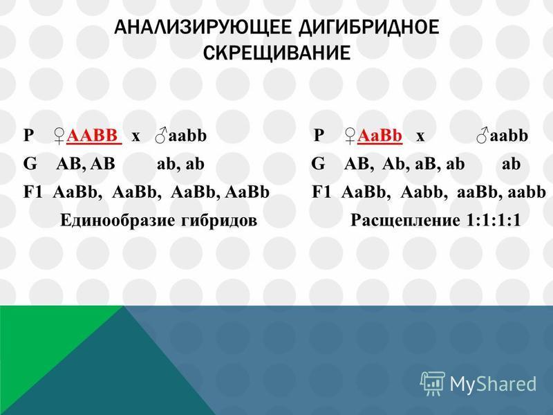 АНАЛИЗИРУЮЩЕЕ ДИГИБРИДНОЕ СКРЕЩИВАНИЕ Р ААВВ х аbb Р АаВb х аbb G АB, AB аb, ab G АB, Ab, aB, ab аb F1 АaBb, АaBb, АaBb, АaBb F1 АaBb, Аabb, aaBb, aabb Единообразие гибридов Расщепление 1:1:1:1