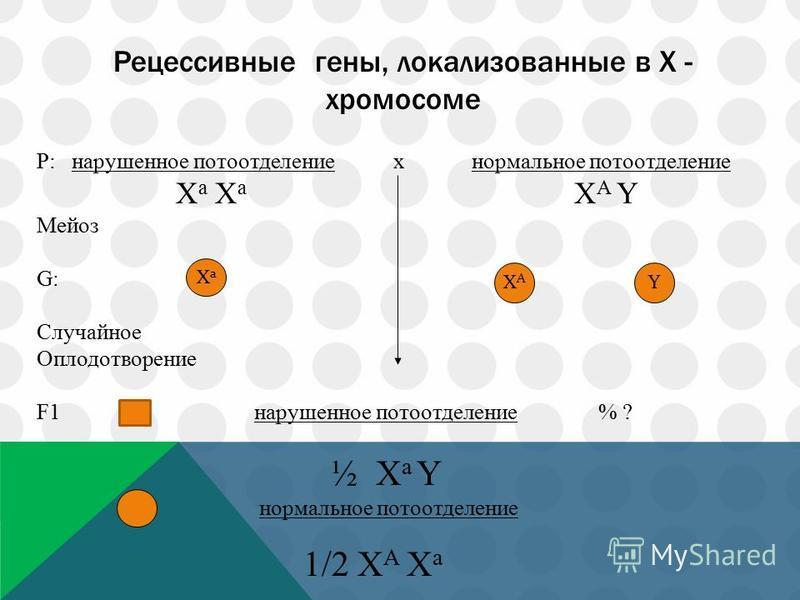 Рецессивные гены, локализованные в Х - хромосоме P: нарушенное потоотделение x нормальное потоотделение Х а Х а Х А Y Мейоз G: Случайное Оплодотворение F1 нарушенное потоотделение % ? ½ X a Y нормальное потоотделение 1/2 Х А Х а Ха Ха ХАХА Y