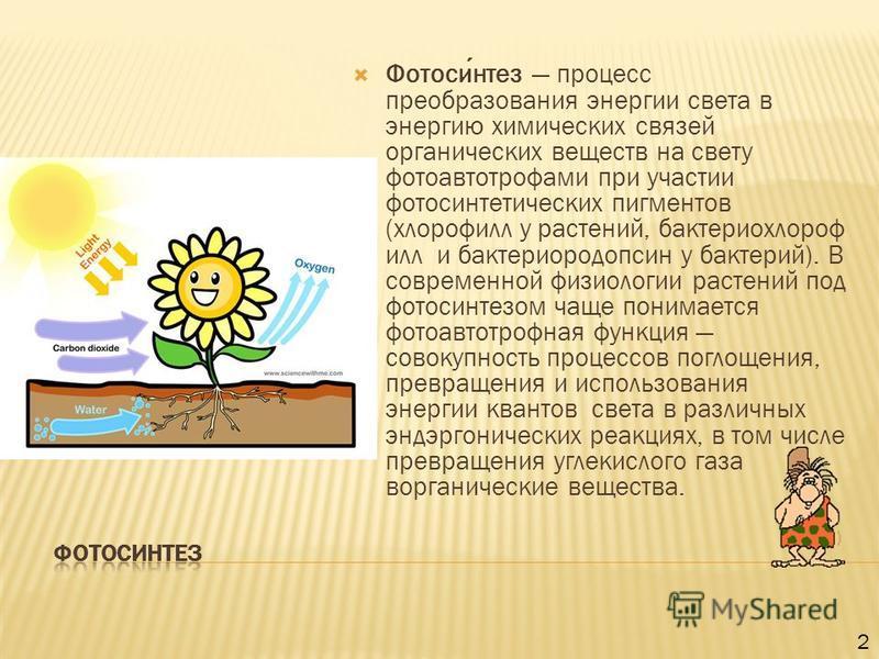 Фотосинтез процесс преобразования энергии света в энергию химических связей органических веществ на свету фотоавтотрофами при участии фотосинтетических пигментов (хлорофилл у растений, бактерий хлорофилл и бактериородопсин у бактерий). В современной