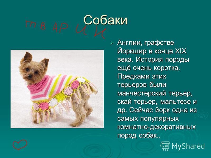 Собаки Колли (шотландская овчарка) – крупная служебная собака. Покладиста, необычно умна, любит детей. Колли (шотландская овчарка) – крупная служебная собака. Покладиста, необычно умна, любит детей. Колли (шотландская овчарка) – крупная служебная соб