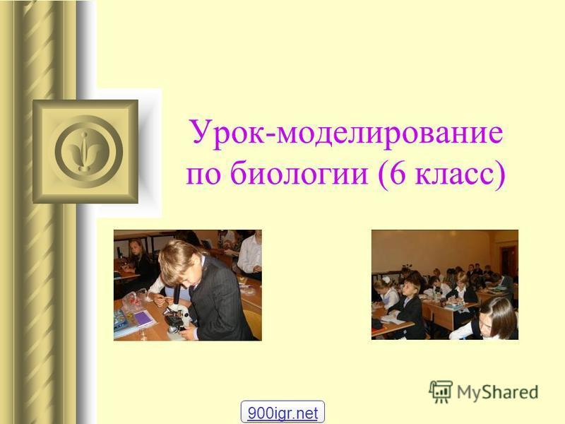 Урок-моделирование по биологии (6 класс) 900igr.net