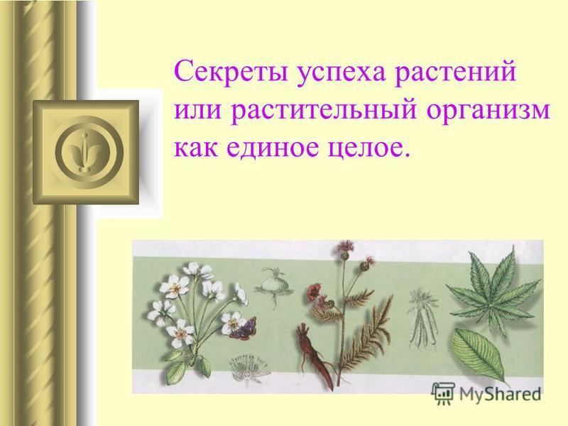 Секреты успеха растений или растительный организм как единое целое.