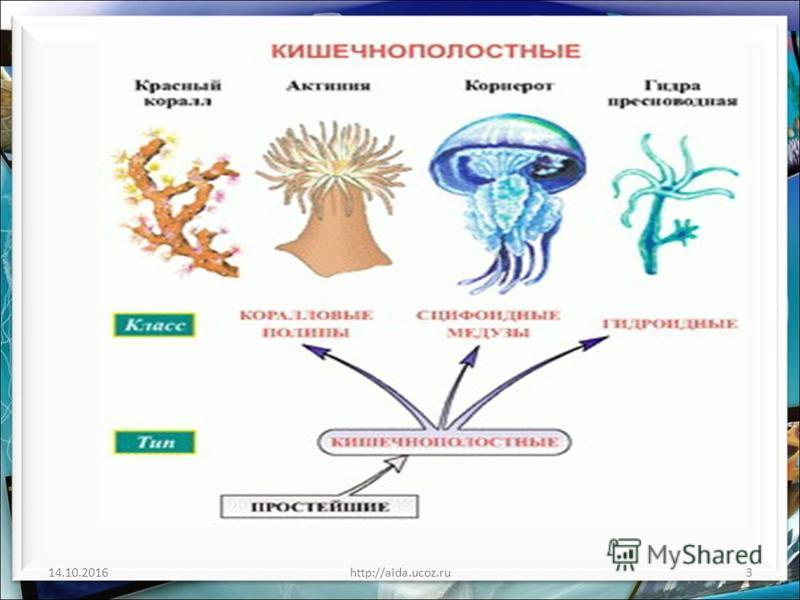 14.10.2016http://aida.ucoz.ru3