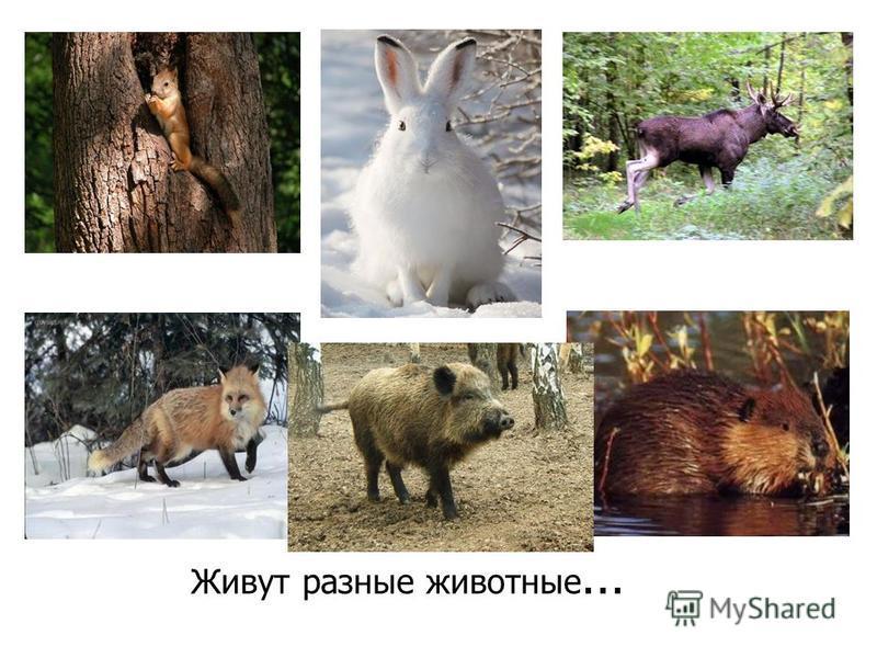 Живут разные животные …