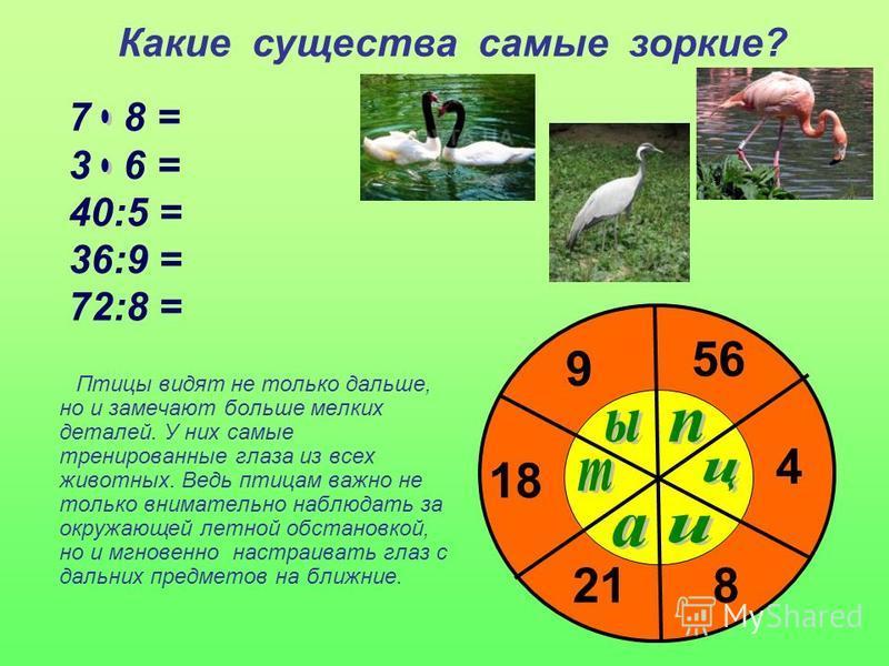 Какие существа самые зоркие? 7 8 = 3 6 = 40:5 = 36:9 = 72:8 = 56 18 8 4 9 21 Птицы видят не только дальше, но и замечают больше мелких деталей. У них самые тренированные глаза из всех животных. Ведь птицам важно не только внимательно наблюдать за окр