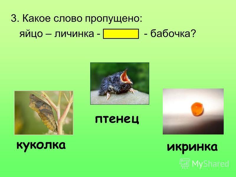 3. Какое слово пропущено: яйцо – личинка - - бабочка? куколка птенец икринка