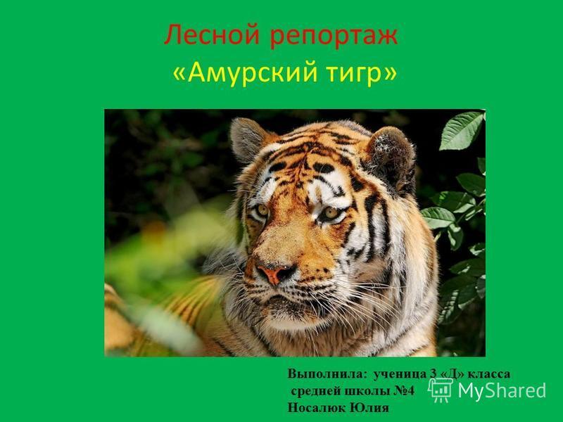 Лесной репортаж «Амурский тигр» Выполнила: ученица 3 «Д» класса средней школы 4 Носалюк Юлия