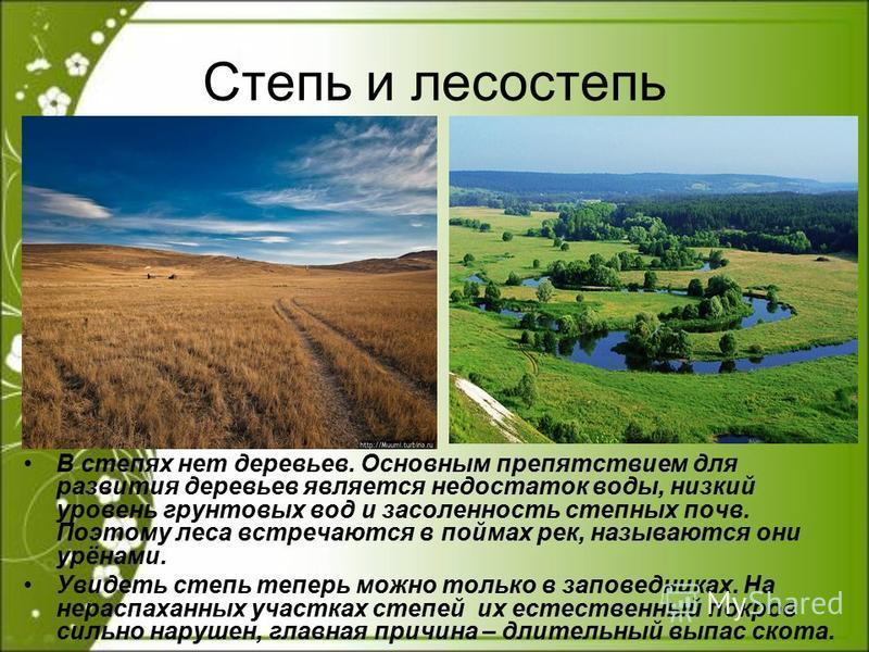 Степь и лесостепь В степях нет деревьев. Основным препятствием для развития деревьев является недостаток воды, низкий уровень грунтовых вод и засоленность степных почв. Поэтому леса встречаются в поймах рек, называются они урёнами. Увидеть степь тепе