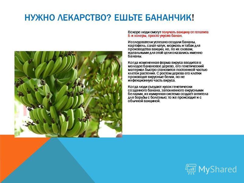 Вскоре люди смогут получать вакцину от гепатита Б и холеры, просто укусив банан. Исследователи успешно создали бананы, картофель, салат-латук, морковь и табак для производства вакцин, но, по их словам, идеальными для этой цели оказались именно бананы