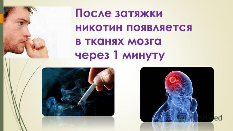 После затяжки никотин появляется в тканях мозга через 1 минуту