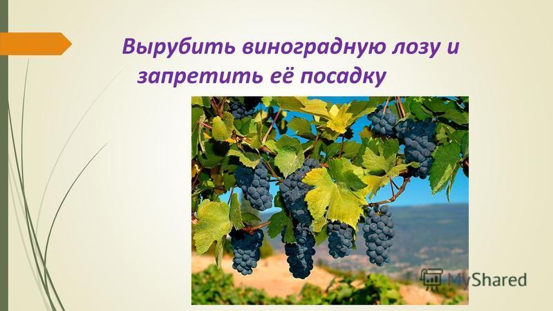 Вырубить виноградную лозу и запретить её посадку