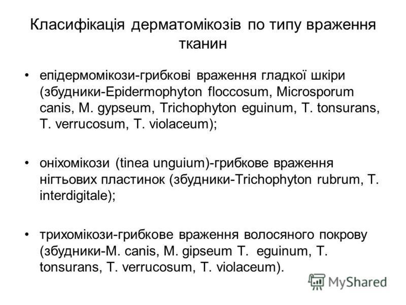 Класифікація дерматомікозів по типу враження тканин eпідермомікози-грибкові враження гладкої шкіри (збудники-Еpidermophyton floccosum, Мicrosporum canis, М. gypseum, Trichophyton eguinum, T. tonsurans, T. verrucosum, T. violaceum); oніхомікози (tinea