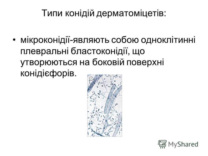 Типи конідій дерматоміцетів: мікроконідії-являють собою одноклітинні плевральні бластоконідії, що утворюються на боковій поверхні конідієфорів.