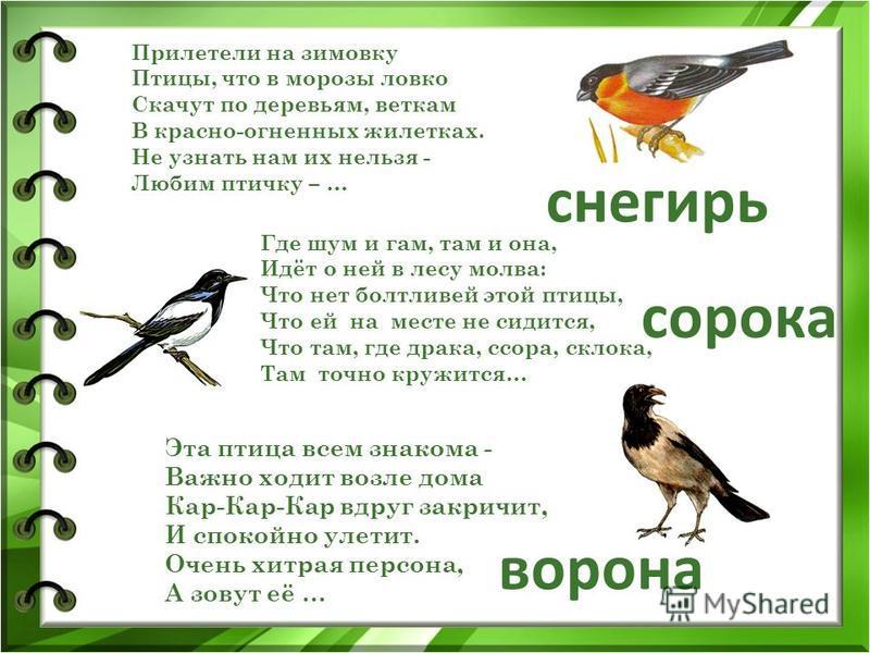 Прилетели на зимовку Птицы, что в морозы ловко Скачут по деревьям, веткам В красно-огненных жилетках. Не узнать нам их нельзя - Любим птичку – … ворона снегирь сорока Где шум и гам, там и она, Идёт о ней в лесу молва: Что нет болтливей этой птицы, Чт