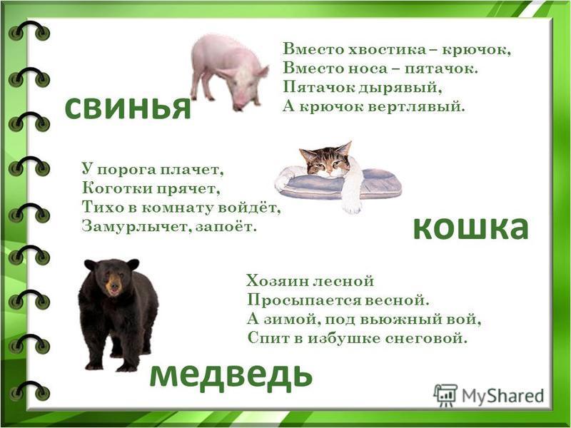 Вместо хвостика – крючок, Вместо носа – пятачок. Пятачок дырявый, А крючок вертлявый. свинья У порога плачет, Коготки прячет, Тихо в комнату войдёт, Замурлычет, запоёт. кошка медведь Хозяин лесной Просыпается весной. А зимой, под вьюжный вой, Спит в