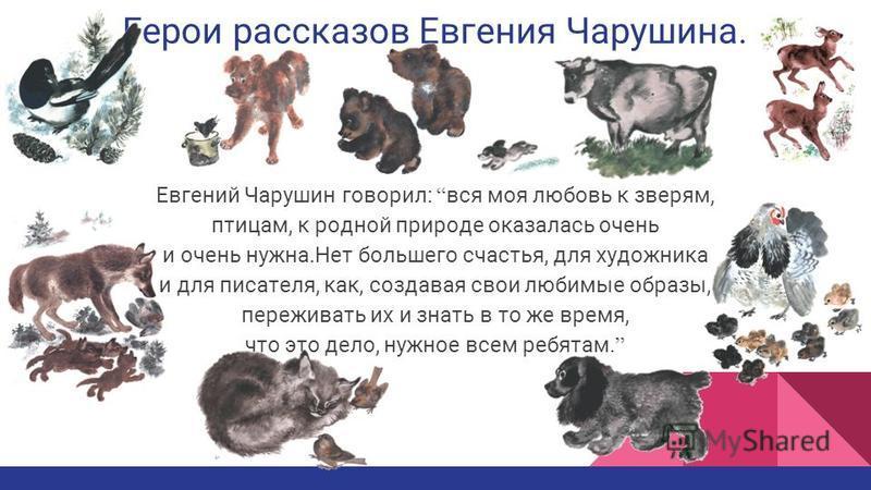 Герои рассказов Евгения Чарушина. Евгений Чарушин говорил: вся моя любовь к зверям, птицам, к родной природе оказалась очень и очень нужна.Нет большего счастья, для художника и для писателя, как, создавая свои любимые образы, переживать их и знать в