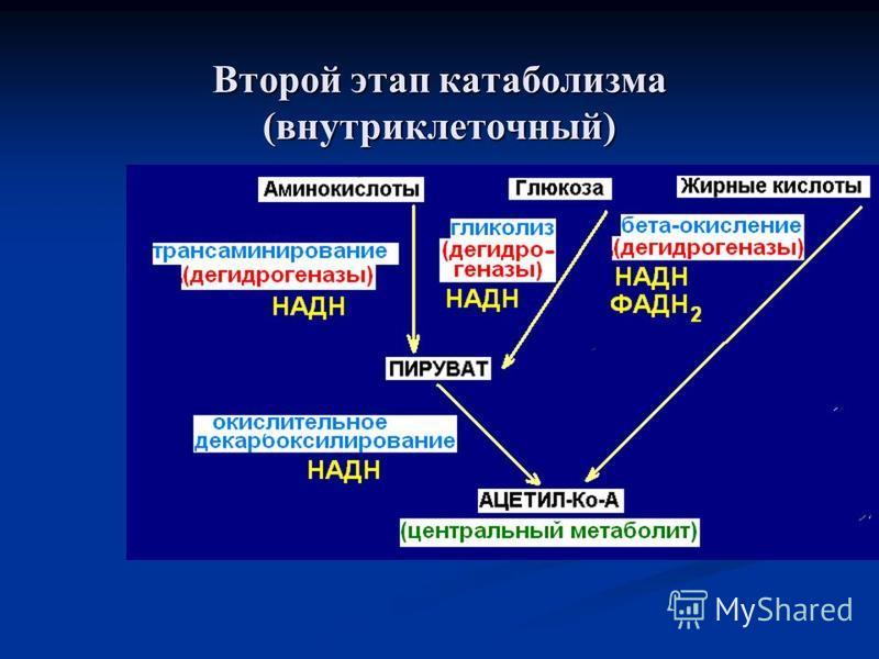 Второй этап катаболизма (внутриклеточный)
