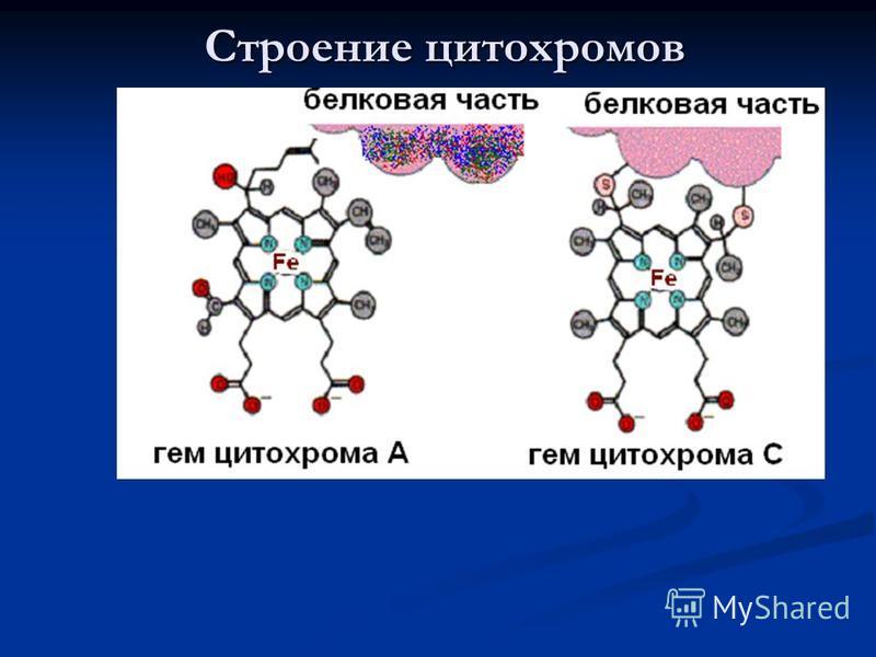 Строение цитохромов
