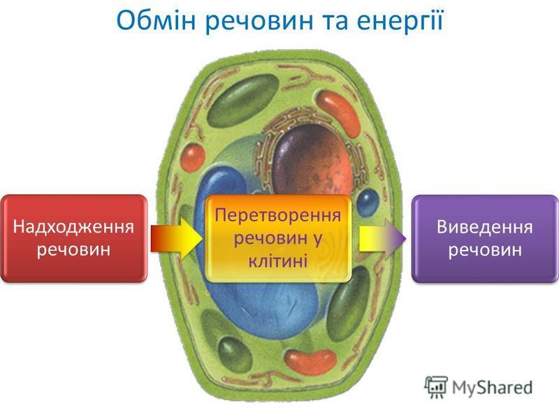 Обмін речовин та енергії Надходження речовин Перетворення речовин у клітині Виведення речовин